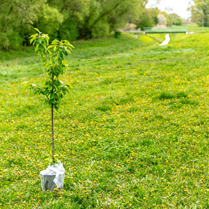 Read more about the article Planting native trees and wildflowers